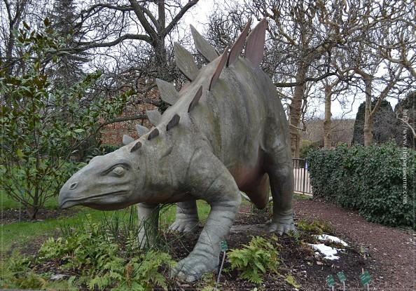 Tricératops Jardin des Plantes 1