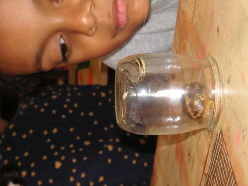 Des escargots en classe de CP...