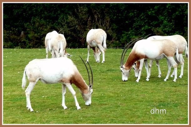 Planète Sauvage Safari Parc- Port Saint Père ( proche de Nantes).