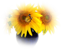 *** Sun Flower ***