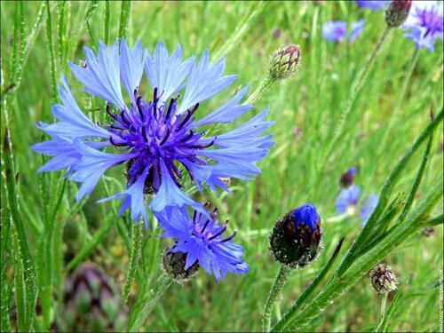 Acrostiche en fleurs B