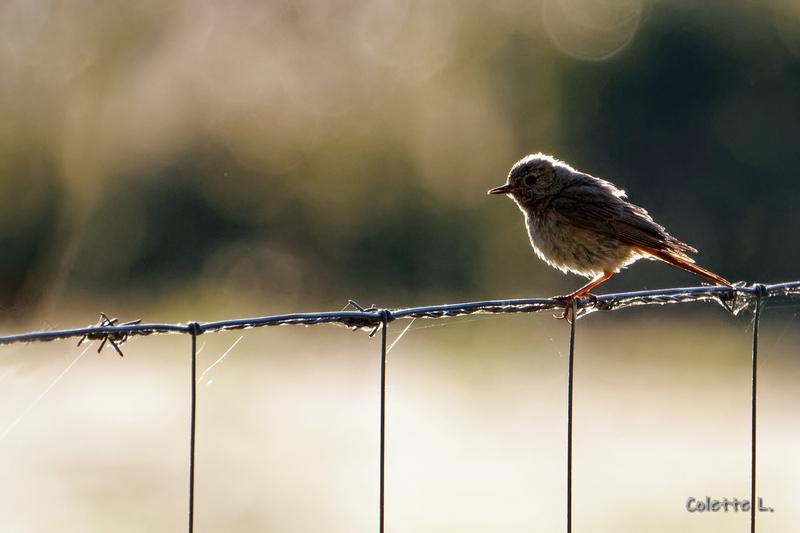 Oiseau du petit matin