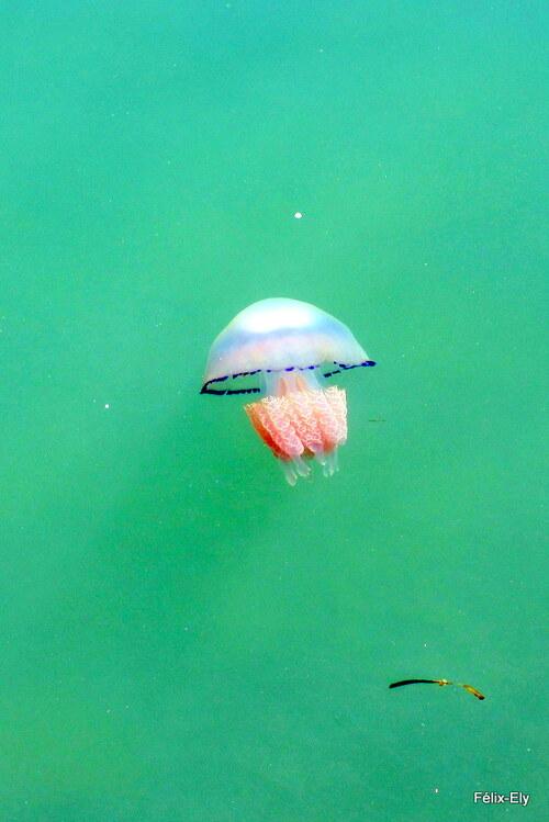 La méduse ...