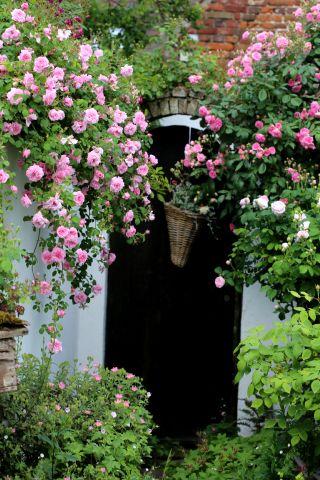 May Queen : une pluie de roses !