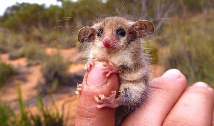 L'Australie appartient àunautre monde etces 24photos nous montrent pourquoi
