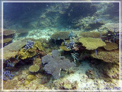 Couleurs sous-marines - Nosy Mitsio - Madagascar