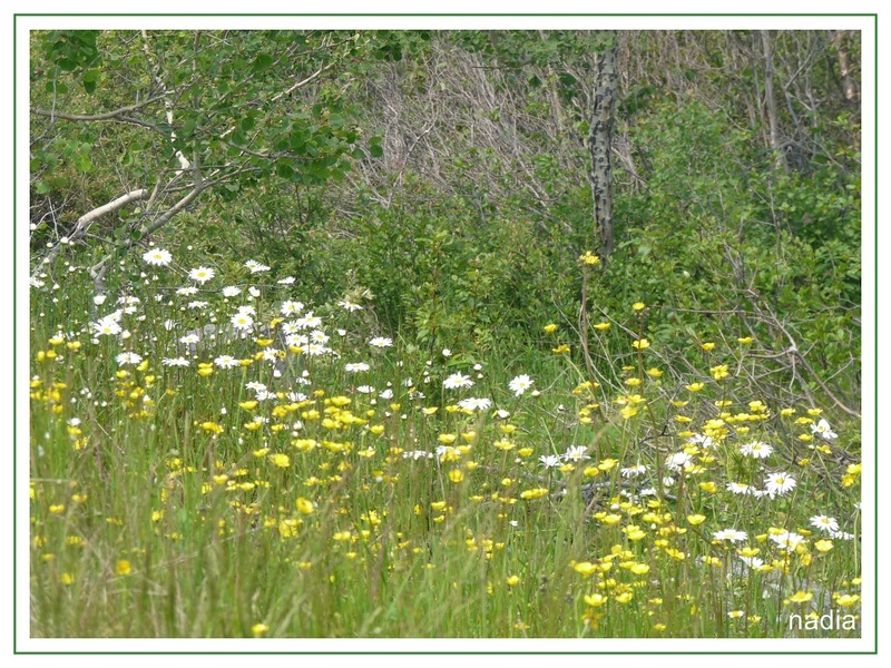 Photos du marais en juillet.