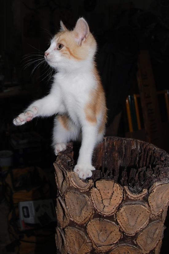 chaton09juilletp
