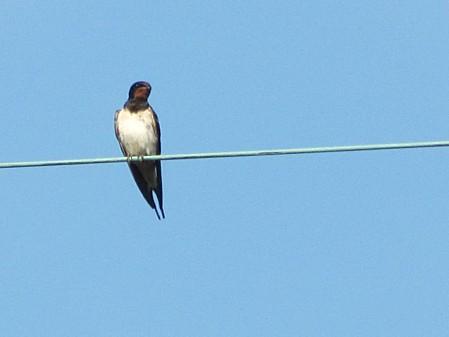 les-oiseaux-et-autres-volatiles 0673