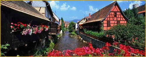 Le géranium, emblème de l'Alsace