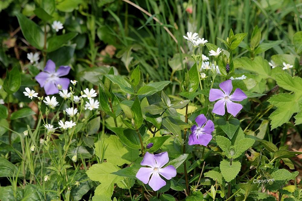 En mode confinement - 6 :  le jardin violet