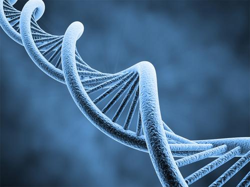 Découverte le 25 Avril 1953 , l'ADN