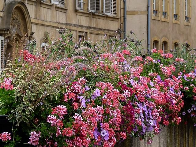 Metz en fleurs 12 mp1357 2011