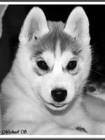 Ourka (3 mois)