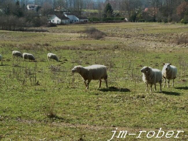 Condat sur Vienne 87: Si les lieux et Terres pouvaient parler.....au passé.