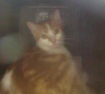 chatte abattoir novembre 2011