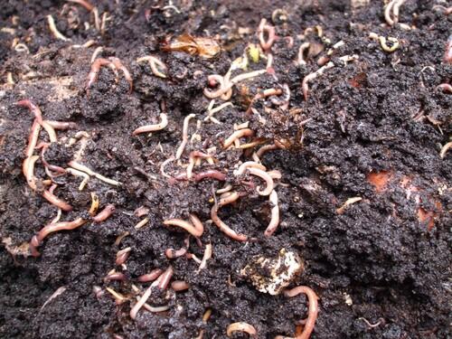 faune du compost