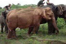 L'eléphant Blanc