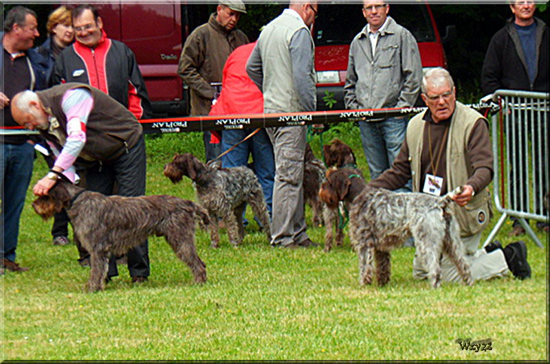 Expositions Canine