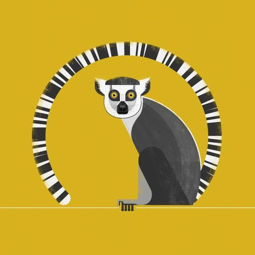 lémuriens illustrés