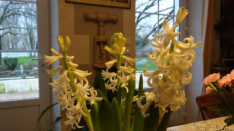 Fleurs de Fin de Semaine...
