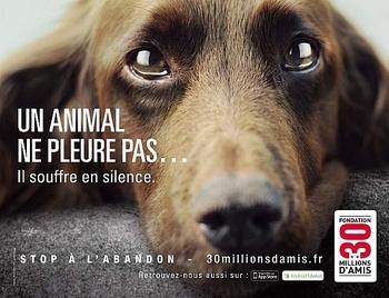 abandon-animaux-campagne-2012