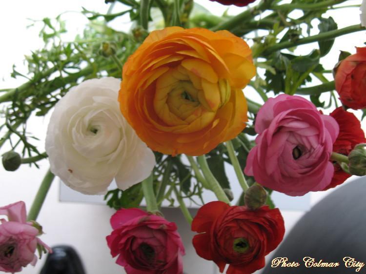 Des fleurs chez le coiffeur 23