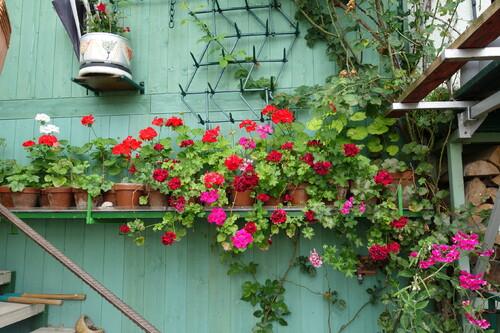 Le jardin de Madame et Monsieur B...