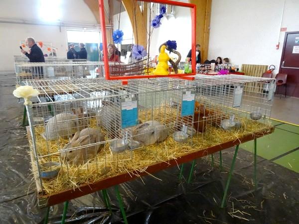 Le salon avicole de 2016 a présenté des volailles de toute beauté...
