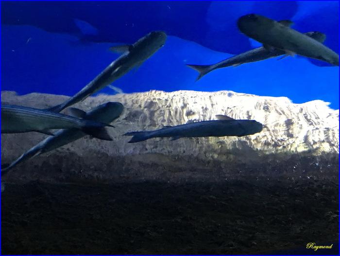 Aquarium de la rochelle.1