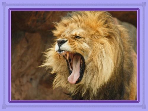 La gestion de la colère (1 à 5)