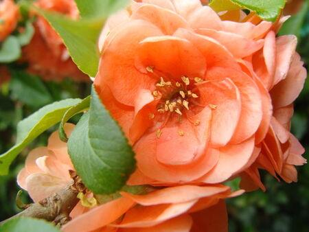 Macro_fleurs_du_jardin__1_