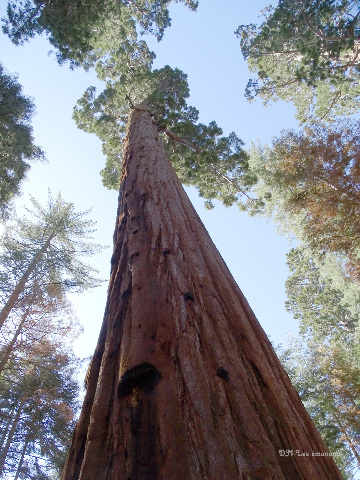 les géants de californie : les sequoias - zone paranormal