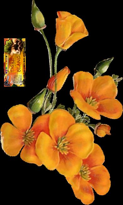 -- Fleurs --