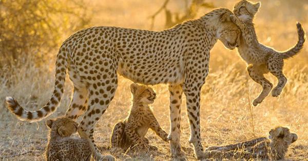 Quels sont les animaux les plus agressifs du monde ? - L'animal le plus dangereux