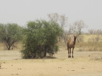 377 Mali Dernier repas sous un baobab