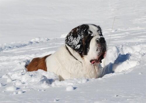 Dailys dans la neige...