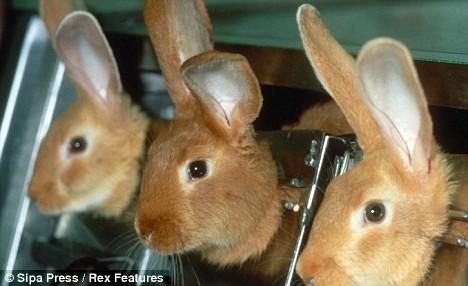 Résultat d'images pour lapins laboratoire