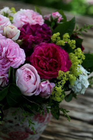 Des roses pour Rose