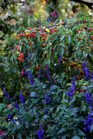 L'automne au jardin (1/3)