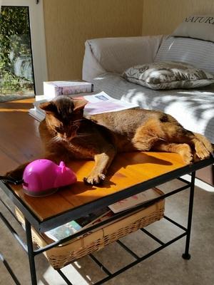 Le chat et la souris .......