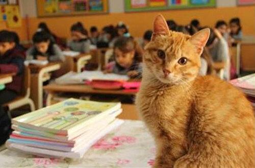 La belle histoire de Tombi le chat écolier