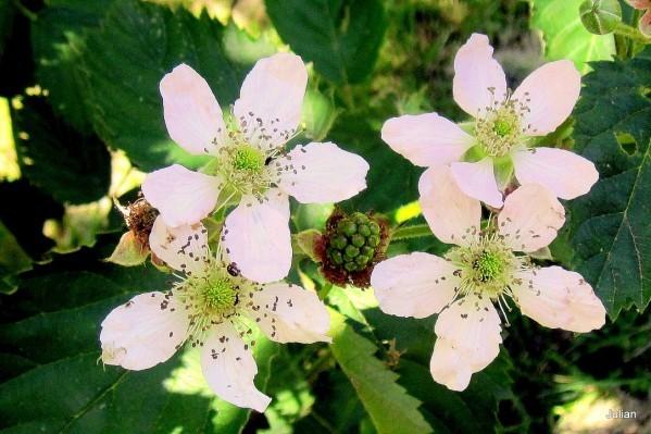 w01 - Fleurs