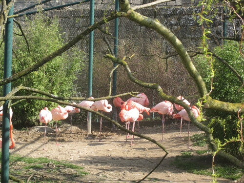 Camille St Saens , le carnaval des animaux