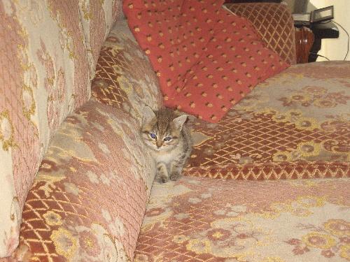 mon chaton