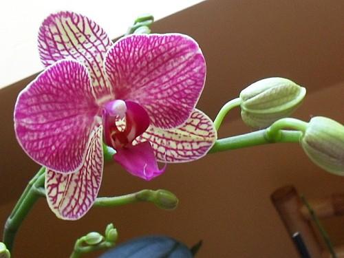 orchidées 1
