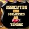 Molosses-Au-Coeur-Tendre