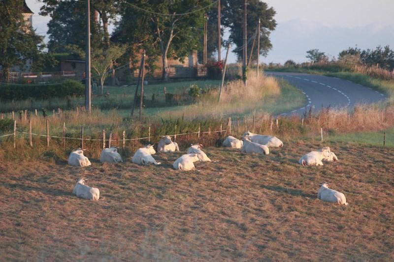 812 - Lorsque Charre se réveille (64) !