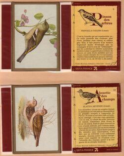 Série oiseaux