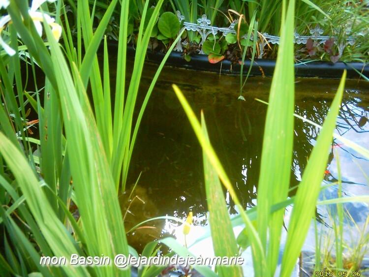 mon bassin dans mon jardin (photos @lejardindejeanmarie